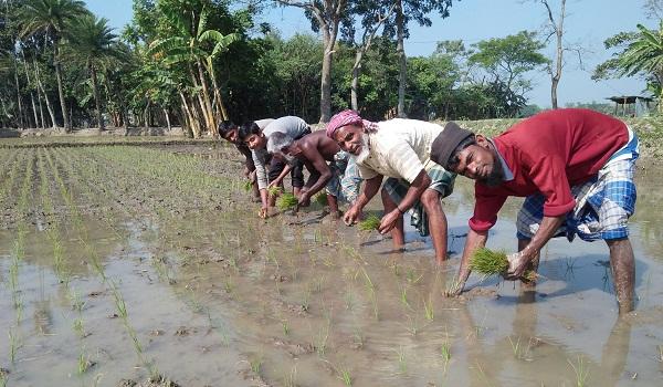 গৌরীপুরে বোর আবাদে ব্যস্ত কৃষকরা