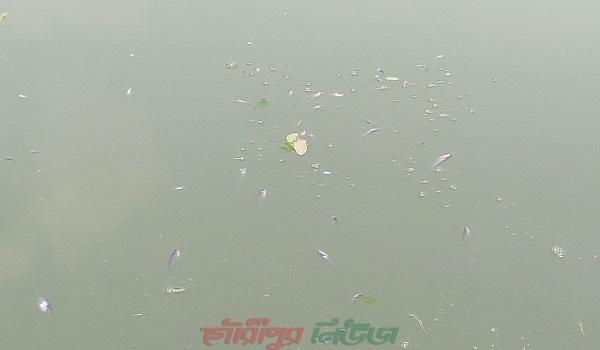 গৌরীপুরে শত্রুতার জেরে বিষ প্রয়োগে পুকুরের ৪ লক্ষ টাকার মাছ নিধনের অভিযোগ