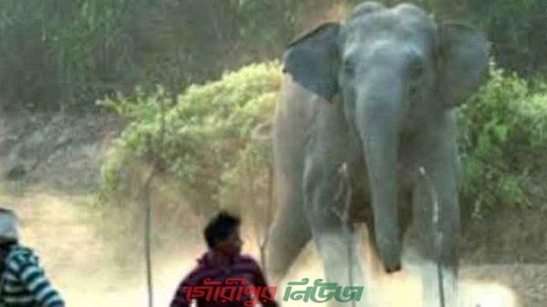 জামালপুরে ভারতীয় হাতির তাড়া খেয়ে প্রাণ গেল যুবকের