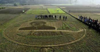 শৈল্পিক বুননে ফসলের মাঠে 'বঙ্গবন্ধুর ভাস্কর্য' আঁকলেন কৃষক আব্দুল কাদির