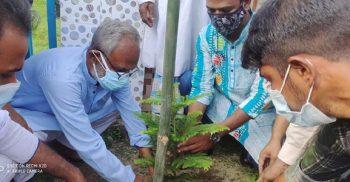 গৌরীপুরে জেলা পরিষদের অর্থায়নে বৃক্ষরোপণ কর্মসূচীর উদ্বোধন