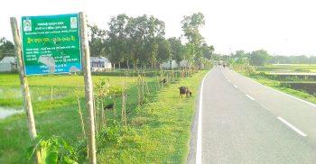 গৌরীপুরে সুফল প্রকল্পে অনিয়ম-দুর্নীতি, খোঁজ নেই বন কর্মকর্তার